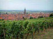 dambach-la-ville-01